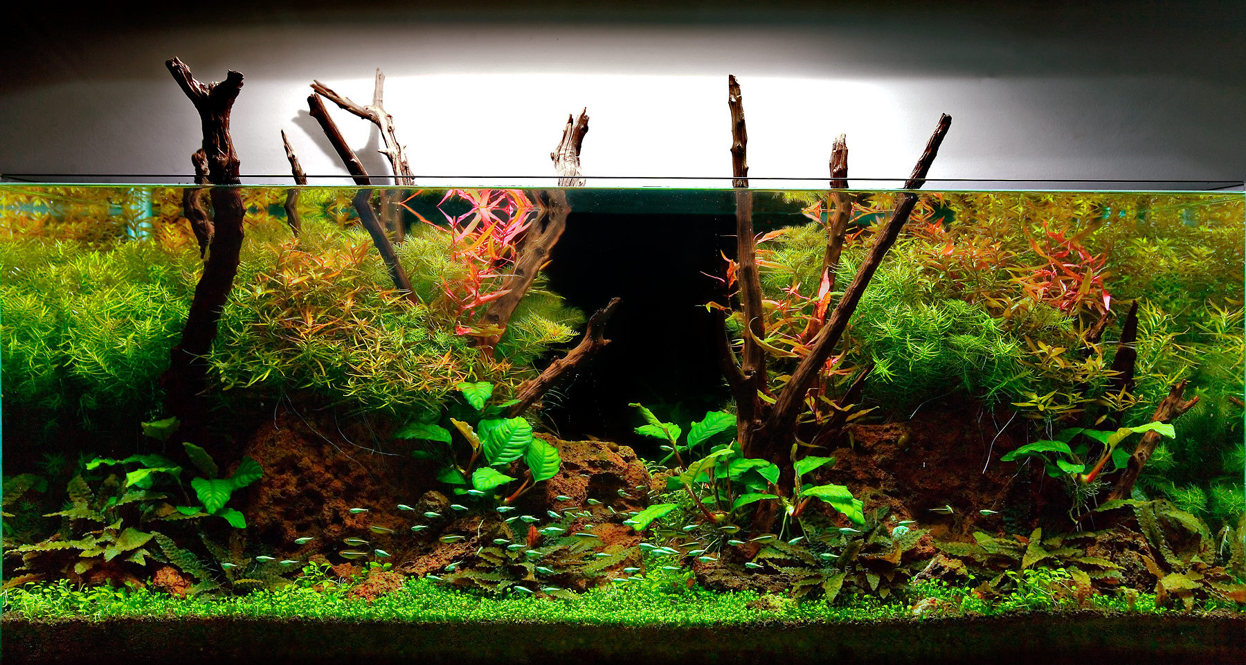 My planted aquarium imod for Plante aquarium