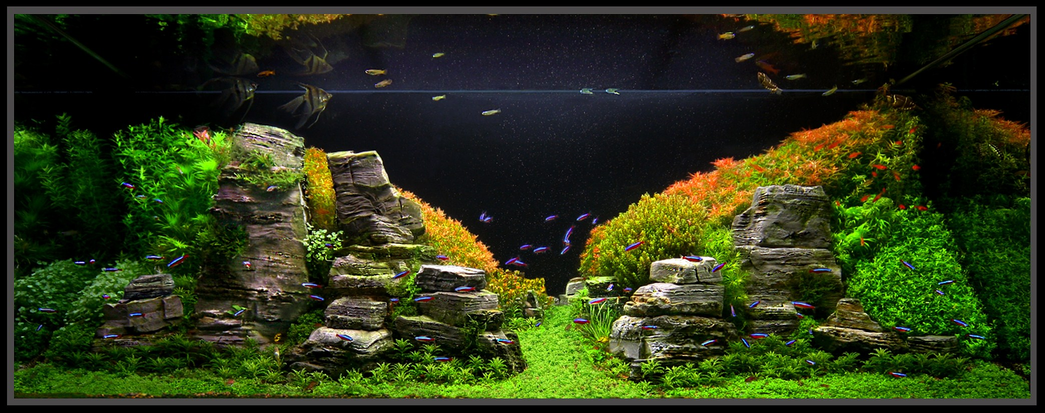 Planted aquarium inspiration for a fresh year imod for Plante aquarium